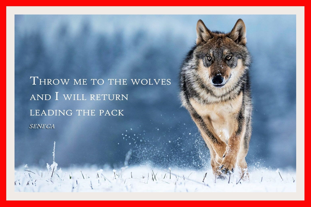 [Image: Throw_me_to_the_wolves_and_I_will_return...e8b1c4.jpg]
